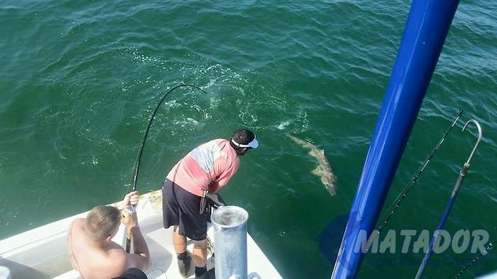 Our Mate Robert Prepares To Release A Sand Tiger Shark